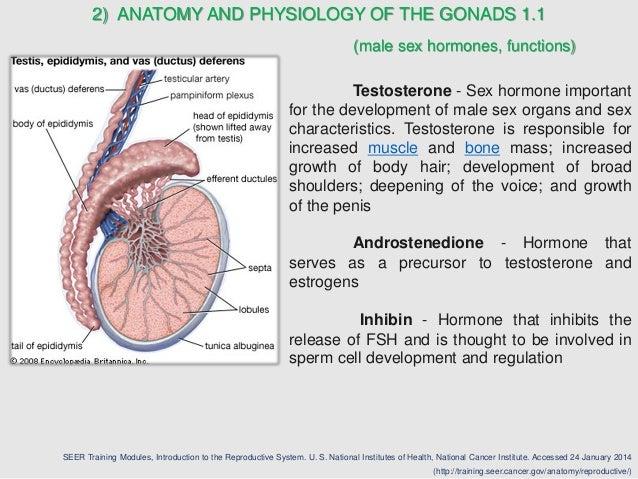 Diseases of Gonads