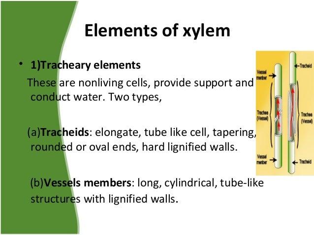 Xylem Xylem Tissue Type