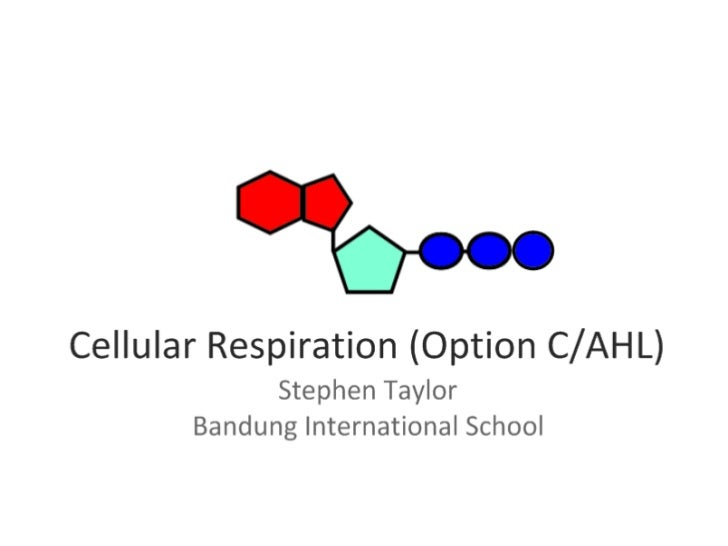 Cell Respiration (8.1 & C3)