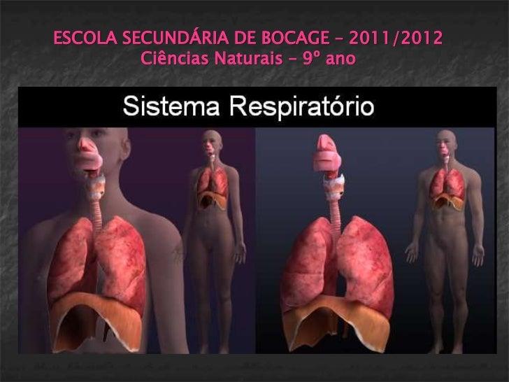 ESCOLA SECUNDÁRIA DE BOCAGE – 2011/2012         Ciências Naturais – 9º ano