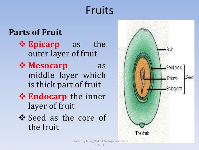 what are the functions of stomata and lenticels