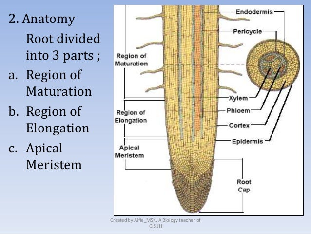 Anatomy structure and function
