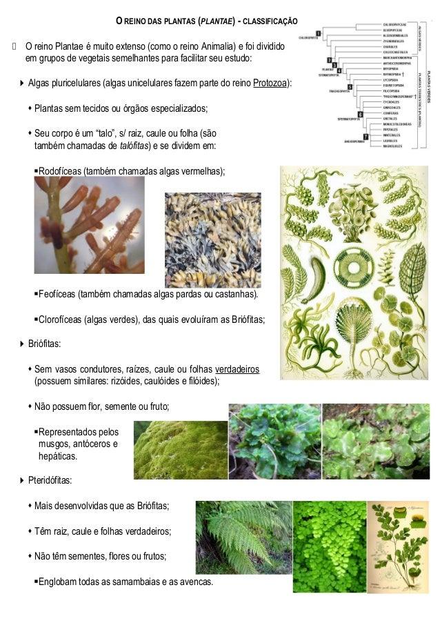 O REINO DAS PLANTAS (PLANTAE) - CLASSIFICAÇÃO  O reino Plantae é muito extenso (como o reino Animalia) e foi dividido em ...