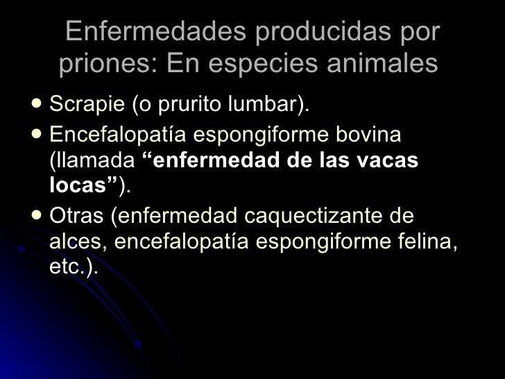 Enfermedades producidas por priones: En especies animales  <ul><li>Scrapie  (o prurito lumbar).  </li></ul><ul><li>Encefal...