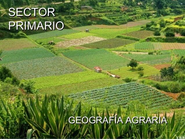 SECTORPRIMARIO           GEOGRAFÍA AGRARIA