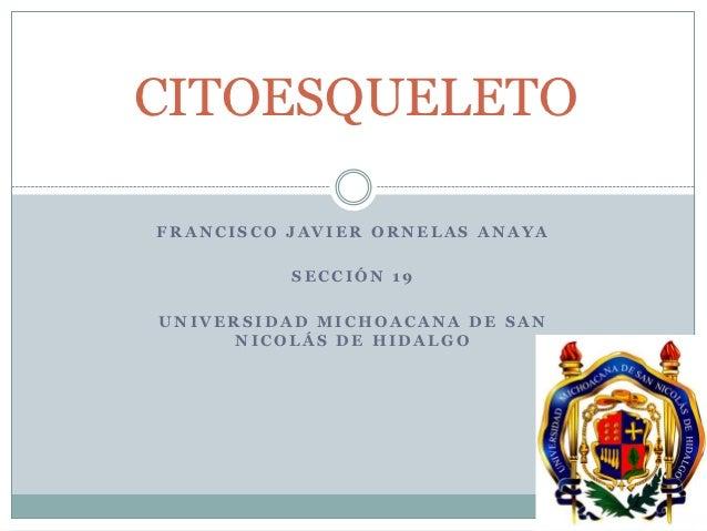CITOESQUELETOFRANCISCO JAVIER ORNELAS ANAYA          SECCIÓN 19UNIVERSIDAD MICHOACANA DE SAN      NICOLÁS DE HIDALGO