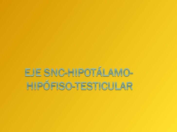 Sistema Nervioso Central   Los neurotransmisores del SNC actúan sobre el   hipotálamo para regular la síntesis y secreción...
