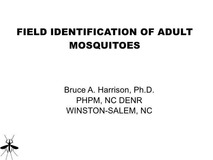 FIELD IDENTIFICATION OF ADULT MOSQUITOES <ul><li>Bruce A. Harrison, Ph.D. </li></ul><ul><li>PHPM, NC DENR </li></ul><ul><l...