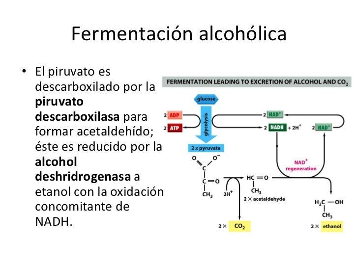 La codificación del alcoholismo del precio el foro