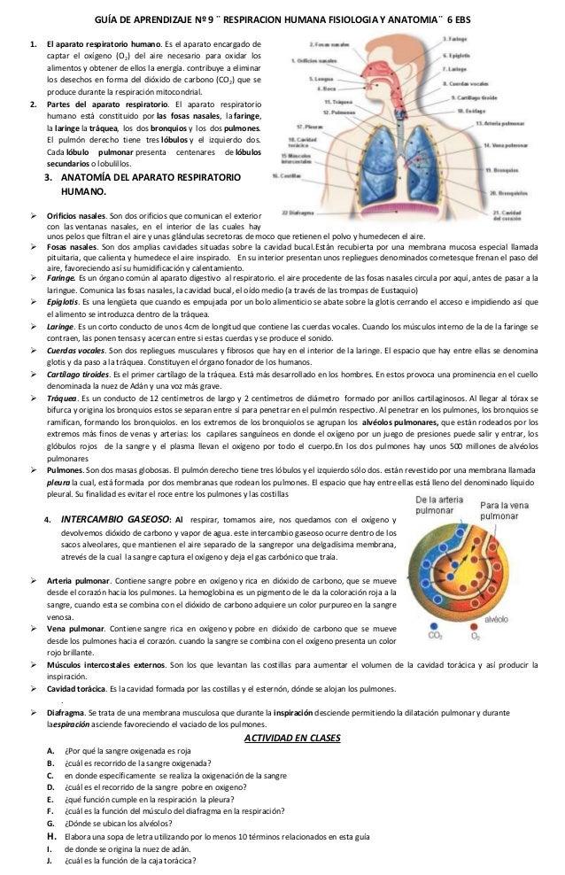 8 guia de aprendizaje nº 8 respiracion humana fisiologia y anatomia