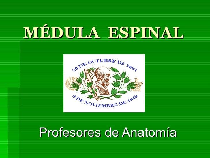 MÉDULA  ESPINAL Profesores de Anatomía
