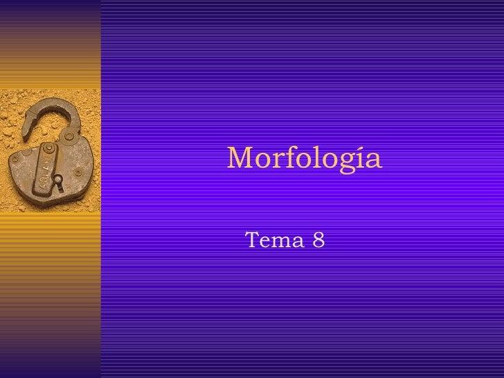 Morfología Tema 8