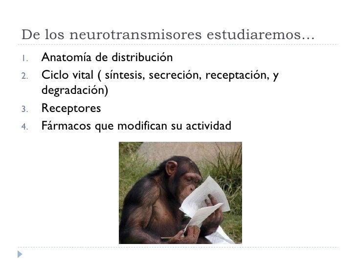 De los neurotransmisores estudiaremos… <ul><li>Anatomía de distribución </li></ul><ul><li>Ciclo vital ( síntesis, secreció...