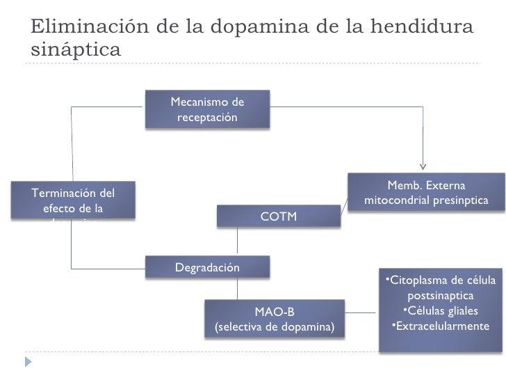 Eliminación de la dopamina de la hendidura sináptica Terminación del efecto de la dopamina MAO-B (selectiva de dopamina) D...