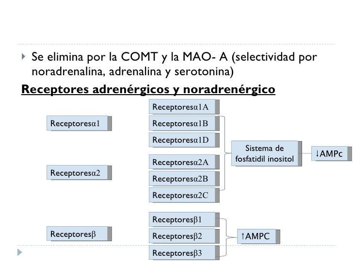 <ul><li>Se elimina por la COMT y la MAO- A (selectividad por noradrenalina, adrenalina y serotonina) </li></ul><ul><li>Rec...
