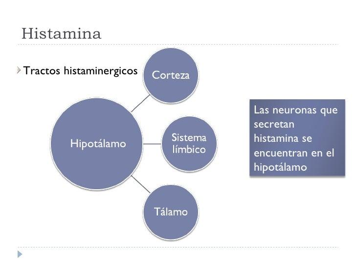 Histamina Hipotálamo <ul><li>Tractos histaminergicos </li></ul>Las neuronas que secretan histamina se encuentran en el hip...