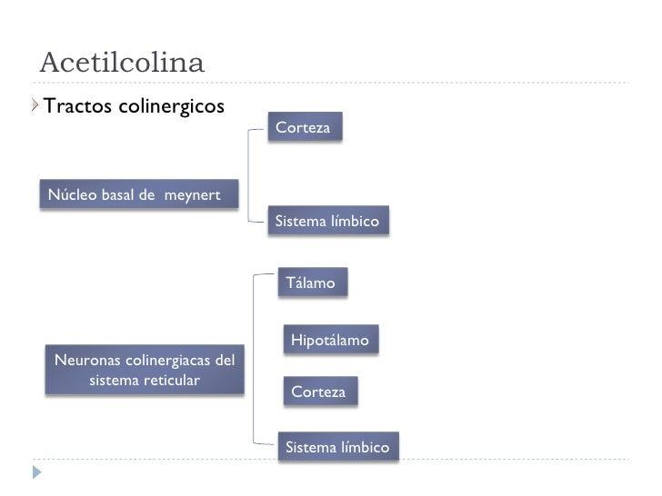 Acetilcolina <ul><li>Tractos colinergicos </li></ul>Núcleo basal de  meynert Tálamo Neuronas colinergiacas del sistema ret...