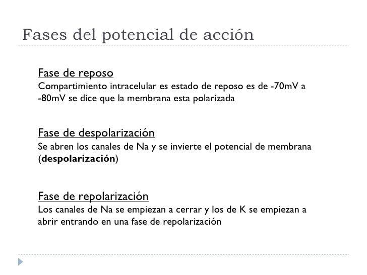 Fases del potencial de acción Fase de reposo Compartimiento intracelular es estado de reposo es de -70mV a -80mV se dice q...
