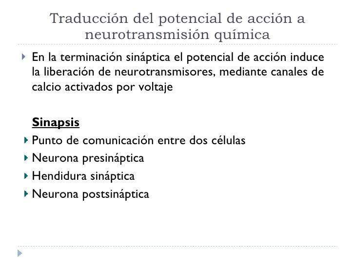 Traducción del potencial de acción a neurotransmisión química <ul><li>En la terminación sináptica el potencial de acción i...