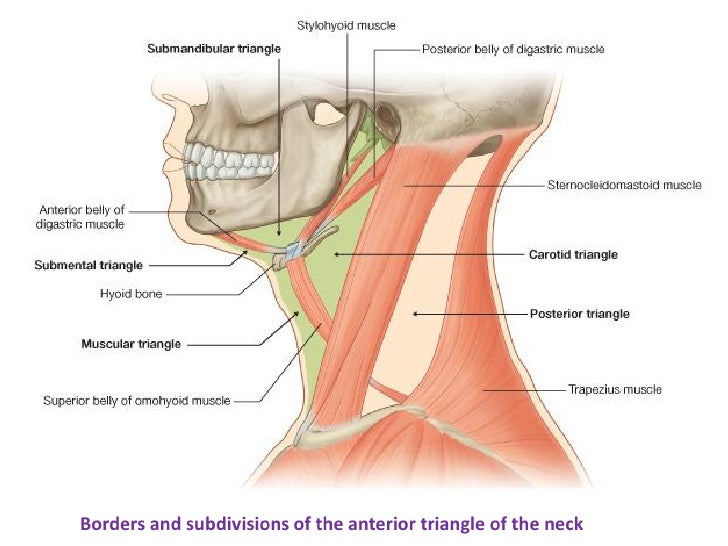 8 Triangles Of The Neck