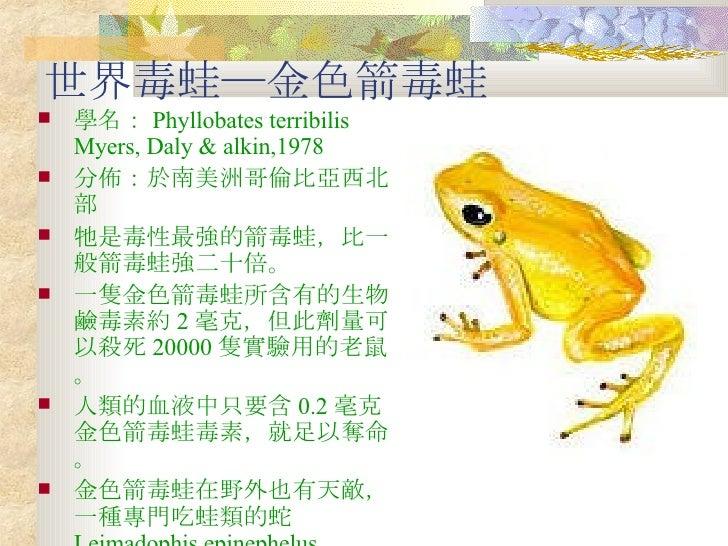 箭毒蛙的毒性 忠和國中 805 Slide 2