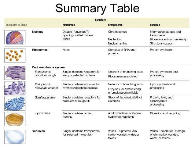 immune system essay Immune system essay topics hiv (human immunodeficiency virus) hiv (human immunodeficiency virus) causes aids (acquired immune deficiency syndrome) that disables.