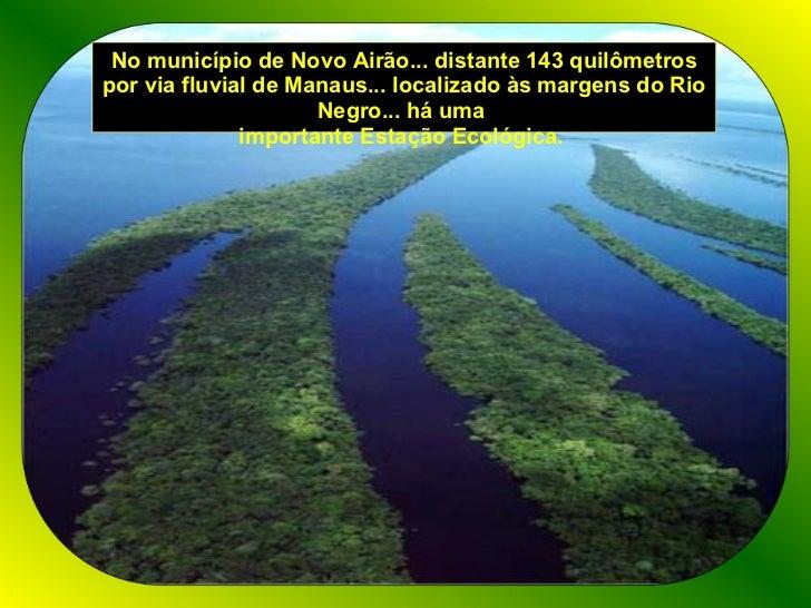 No município de Novo Airão... distante 143 quilômetros por via fluvial de Manaus... localizado às margens do Rio Negro... ...