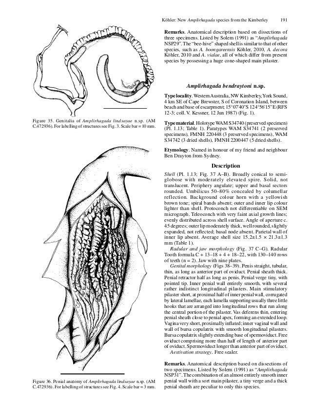 Descriptions Of New Species Of The Diverse And Endemic Land Snail Amp