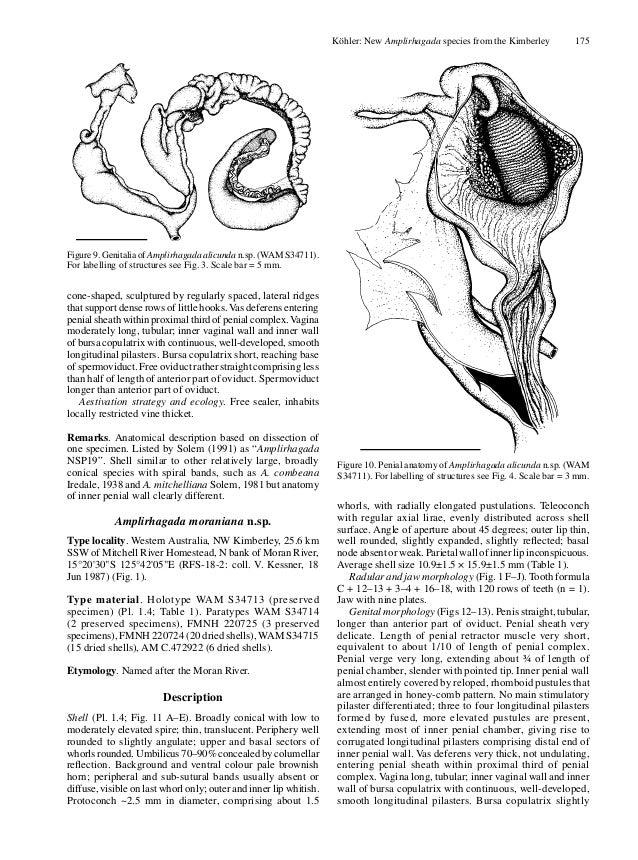 Land Snail Anatomy Gallery - human body anatomy