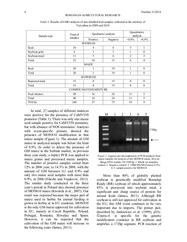 detection of genetically modified maize in It was recently reported that an improved method facilitated the detection of genetically modified organisms (gmos) the dpcr screening method that we developed in this study allowed the detection of the samples with 9 gmo maize events, using one non-gmo maize sample as a negative control,.