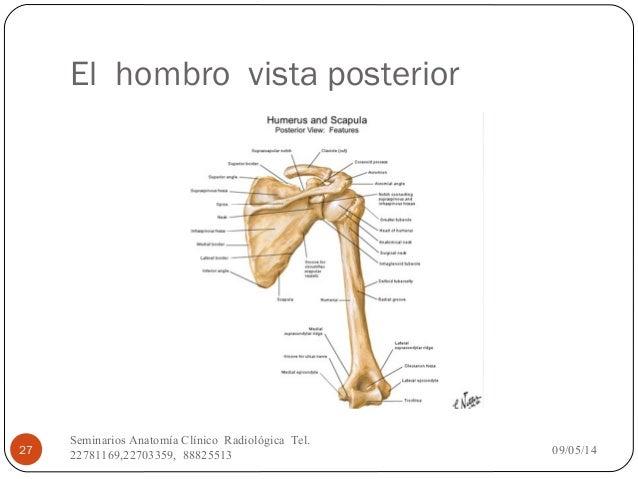 Anatomía Vista Posterior - HD
