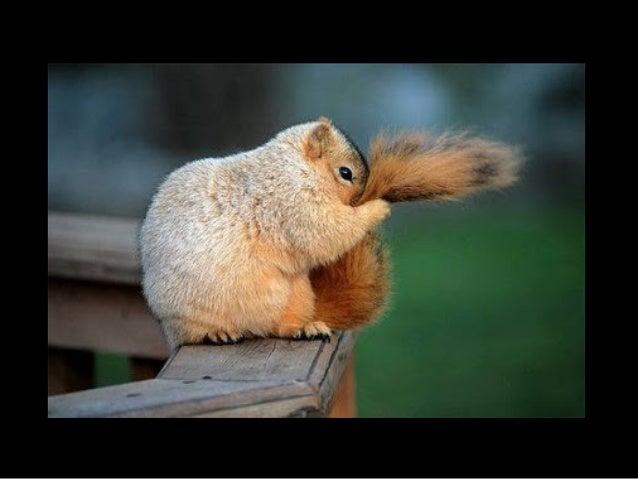 824- squirrels8 Slide 2