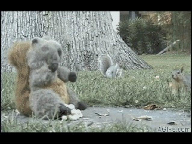 824- squirrels8 Slide 3