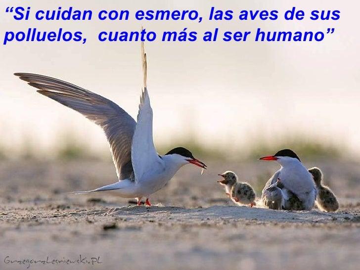 """""""Si cuidan con esmero, las aves de suspolluelos, cuanto más al ser humano""""                                    20"""