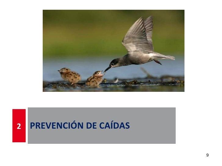 2   PREVENCIÓN DE CAÍDAS                           9