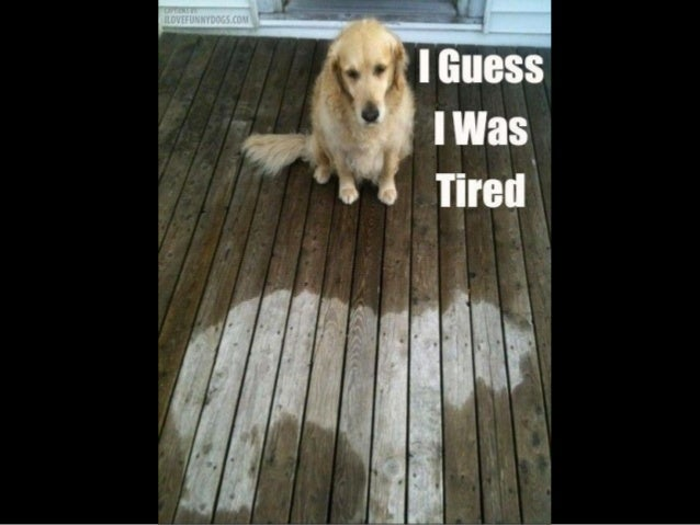 He can't play  hide and seek !
