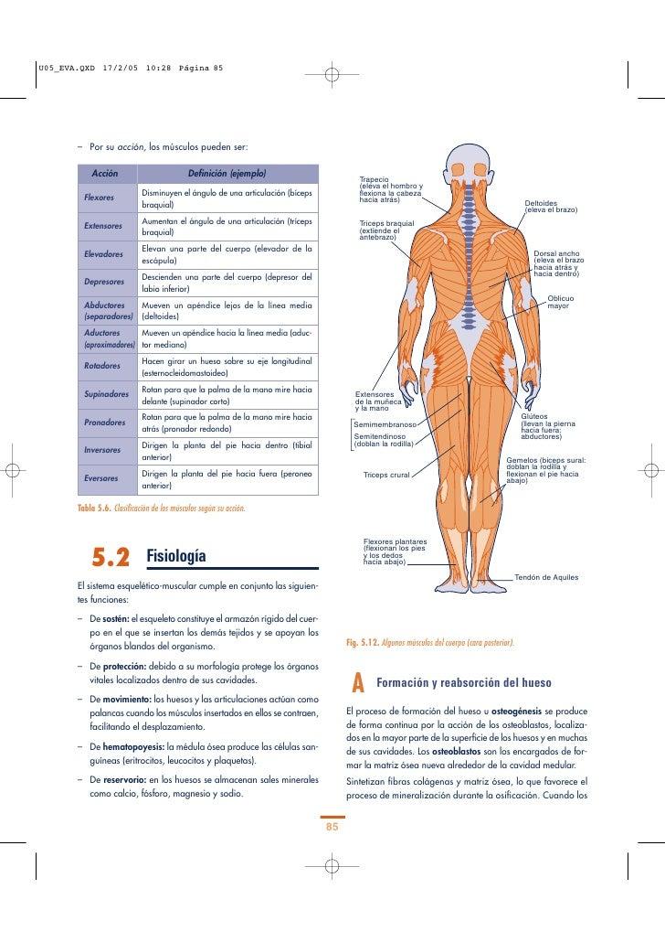 Vistoso Conjunta Anatomía De La Muñeca Friso - Imágenes de Anatomía ...