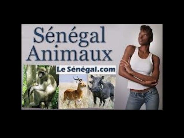 857 senegal-animals Slide 3