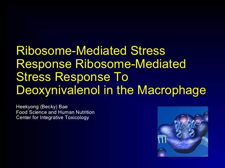 Ribosome-Mediated Stress Response Ribosome-Mediated Stress Response To Deoxynivalenol in the Macrophage Heekyong (Becky) B...
