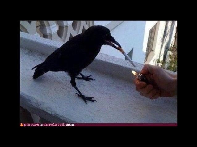 861 pets smokers Slide 2