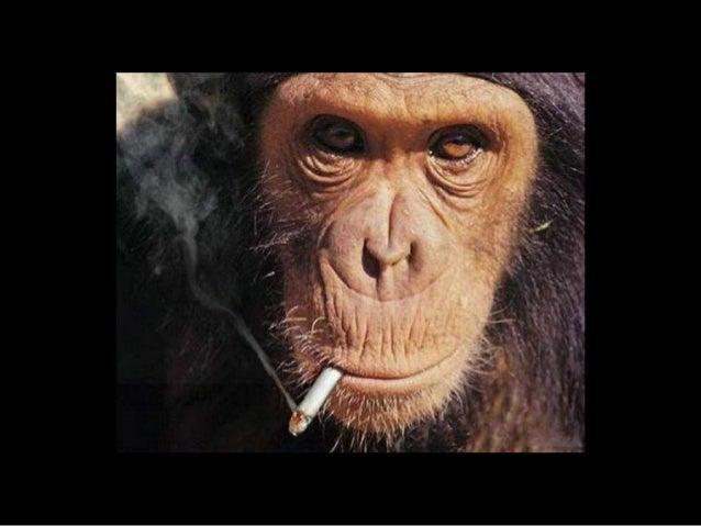 861 pets smokers Slide 3