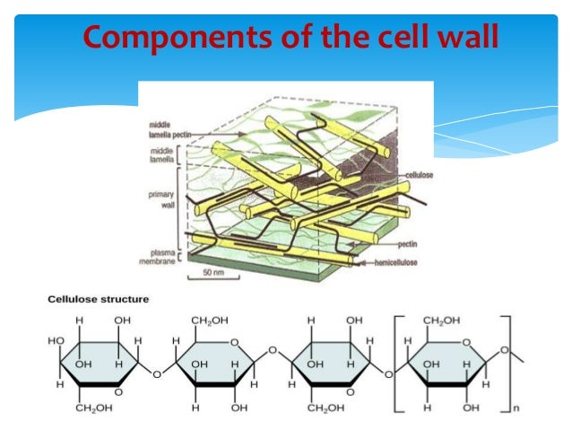 Plant Chemical Components : Cell wall