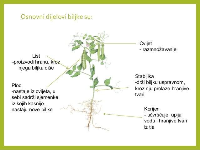 Život biljke