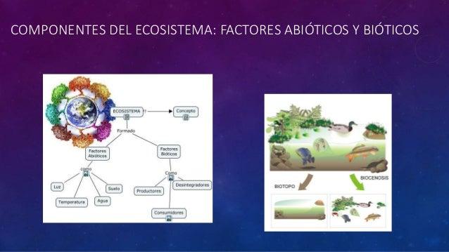 Ecosistema y sus partes