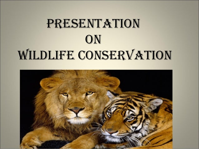conservation of wildlife 3 reasons why you should protect wildlife what is wildlife conservation wildlife conservation is the attempt to protect endangered animal and plant species.