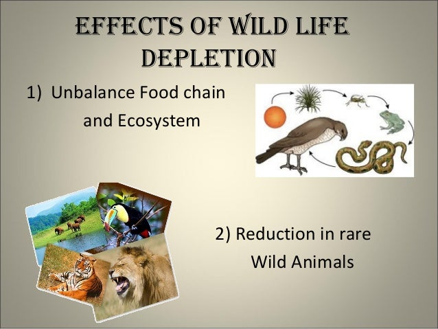 Conclusion On Conservation Of Natural Resources