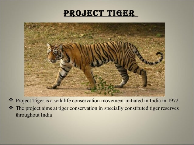 conservation of forests and wildlife essay