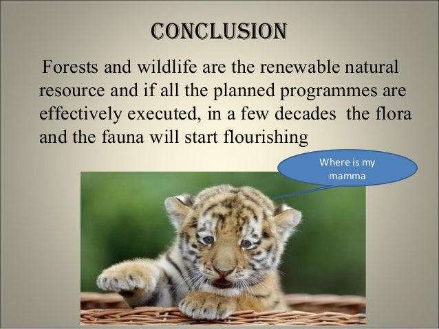 essay on conservation of wildlife Wildlife is a vital part of our ecosystem wildlife includes all animals and other organisms many animals are in the danger of extinction and strongly need to be saved.