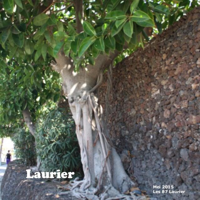 Laurier Mei 2015 Les 87 Laurier