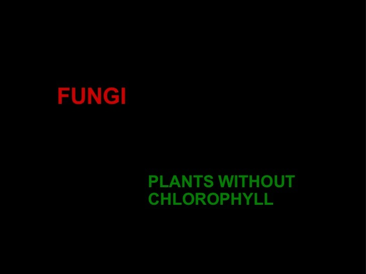 FUNGI PLANTS WITHOUT CHLOROPHYLL